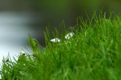 20100202032115-hierba.jpg